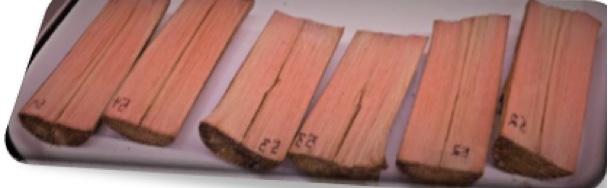 Utilisation de consortiums de souches fongiques pour le développement de bioprocédés de coloration du bois
